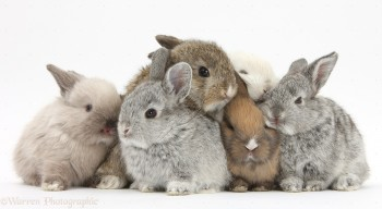 Bunny love with The Blue Cross