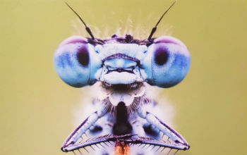 close up photo of an insect