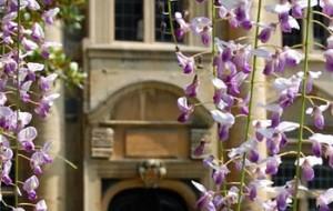 View through wisteria