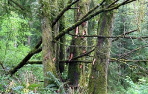 A damaged tree