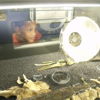 Child looking at artefacts in a display