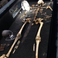 A skeleton on show in the Anglo Saxon gallery.