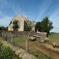 Church at Hampton Poyle with sheep feeding